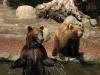 Im Tierpark Hagenbeck