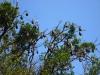 Flughunde im Botanischen Garten