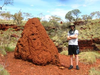 riesiger Termitenhügel im Karijini Nationalpark