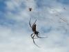 eine faustgroße Spinne...