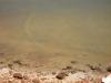 Ein Hai im Peron Nationalpark