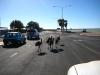 Emus auf der Straße in Denham