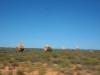 Termitenhügel auf dem Weg nach Exmouth