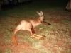 Das Kangaroo hat sich bei uns wohl gefühlt