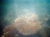 Schnorcheln am Ningaloo Reef